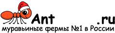 Муравьиные фермы AntFarms.ru - Казань